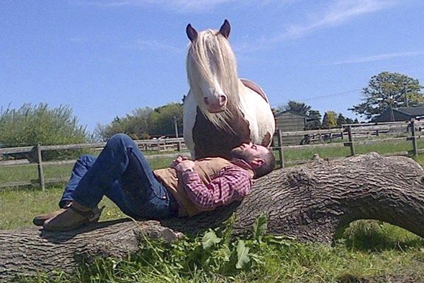 dreamcatcher-horse